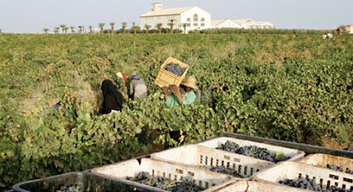 Les exportations de vins tombent à 20% de la production nationale