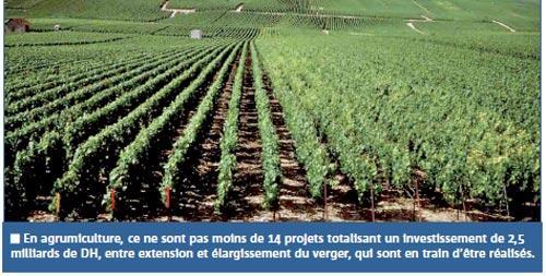 Agriculture : plus de 5 milliards de DH investis au titre des contrats programmes