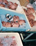 La pêche au poulpe reprendra le 15 juin… et la polémique continue