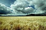 Campagne céréalière : retour de l'optimisme chez les agriculteurs
