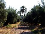 Marrakech veut atteindre 100 000 ha d'oliviers