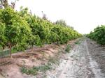 Projet d'irrigation d'El Guerdane: le chantier sera finalisé cet été
