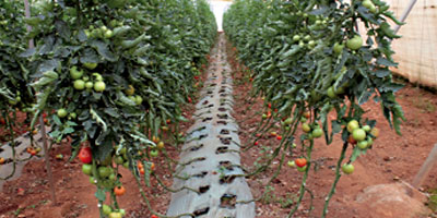 Pesticides agricoles : le bromure de méthyle définitivement éliminé