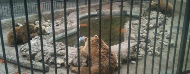 Zoo d'Aïn-Sebaࢠ: les travaux de réhabilitation démarrent au 4e trimestre