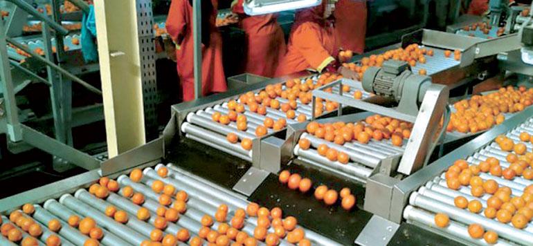 Exportations d'agrumes: le système de régulation sera reconduit