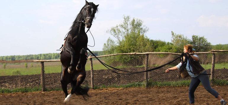 Métiers du cheval : Questions à Omar Skalli,Directeur général de la Société royale d'encouragement du cheval (Sorec)