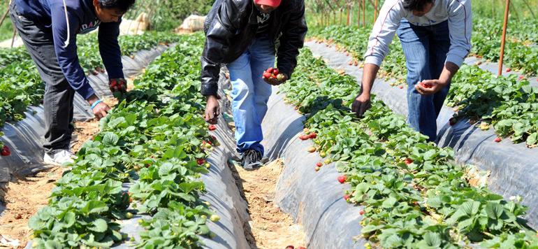 Tanger-Tétouan-Al Hoceima: Mobilisation de plus de 7 MMDH pour la réalisation de projets du plan agricole en 2015