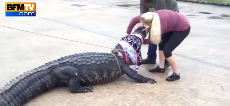 États-Unis: des clients d'un centre commercial tombent sur un alligator de près de 4 mètres