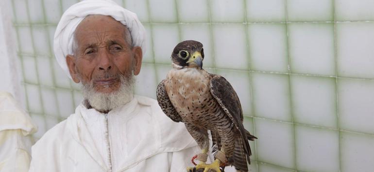 Le Maroc prend part à Lisbonne à une exposition sur «L'art de la fauconnerie de l'Orient à l'Occident»