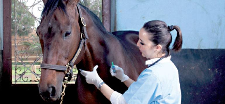 Tout savoir sur les métiers du cheval