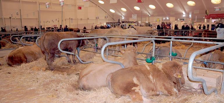 Les filières viandes rouges et lait ciblent le marché de l'Afrique de l'ouest