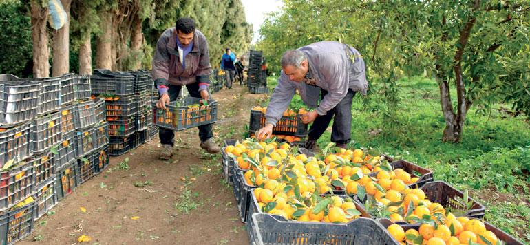 Agrumes : la production en phase avec les objectifs du contrat-programme