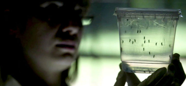 Aucun cas de maladie du virus Zika n'a été enregistré au Maroc