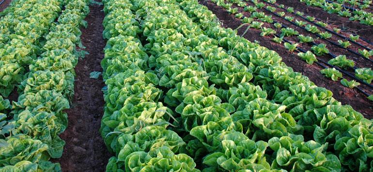 Financement de l'agriculture : Groupe CAM
