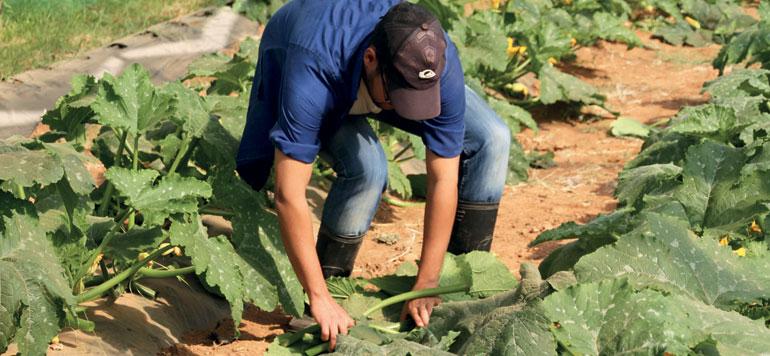 Emploi : les trois groupes de professions qui dominent au Maroc
