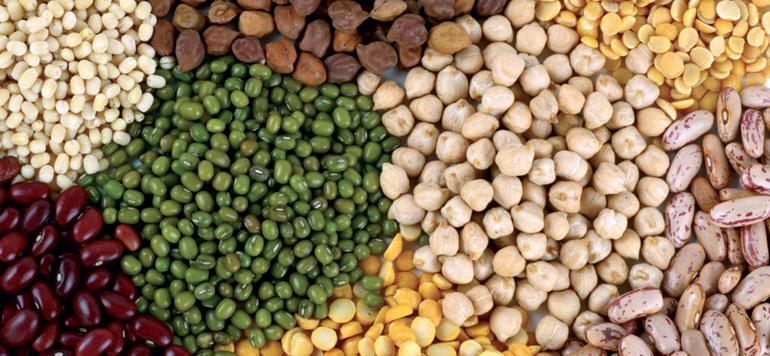 Les légumineuses, une solution durable pour améliorer l'alimentation