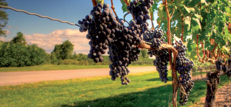Les exportations marocaines de vins ont progressé de 30% en 2015