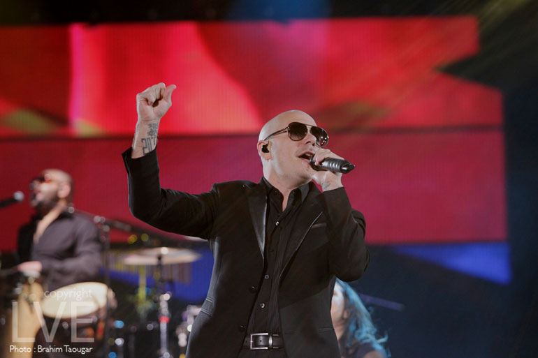 Pitbull-(5)