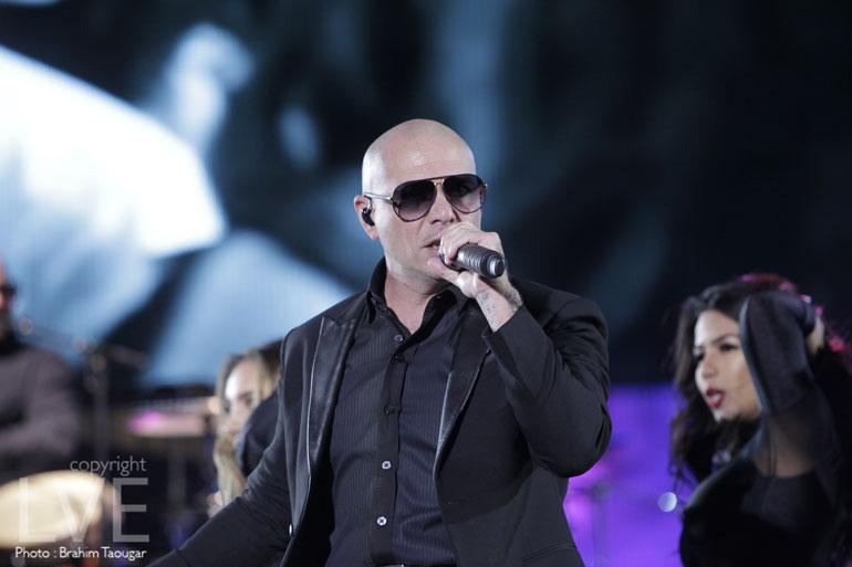 Pitbull-(7)