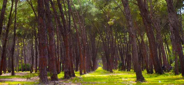 Mise à niveau de la forêt de Bouskoura