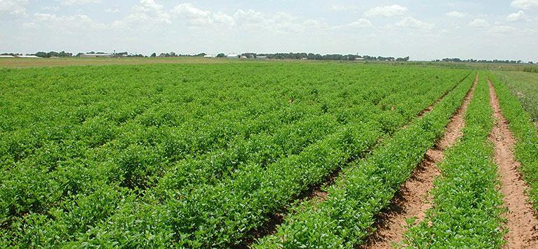 L'INRA propose plusieurs solutions pour optimiser la production