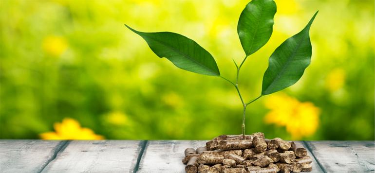 Energies renouvelables :  une stratégie nationale dédiée à la biomasse