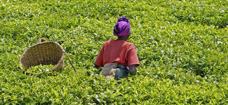 L'Afrique face aux défis du développement durable