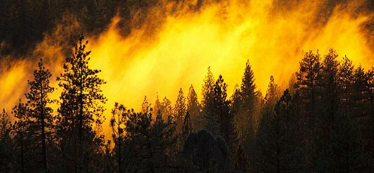 Chefchaouen: Extinction d'un incendie de forêt ayant ravagé environ 7 ha
