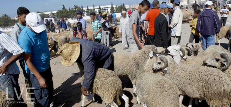Aïd Al Adha : L'offre couvre largement la demande, malgré les conditions climatiques difficiles