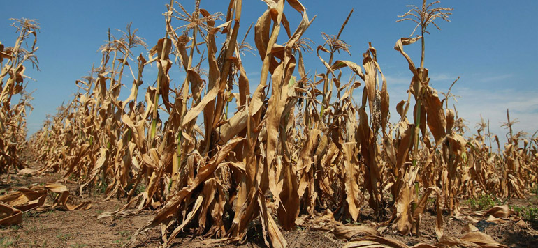 L'agriculture, premier secteur touché par le réchauffement climatique