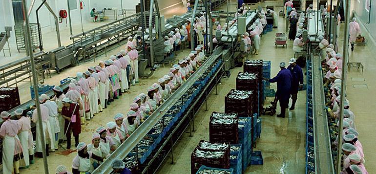 Poisson : les industriels dénoncent la grève des armateurs du Sud