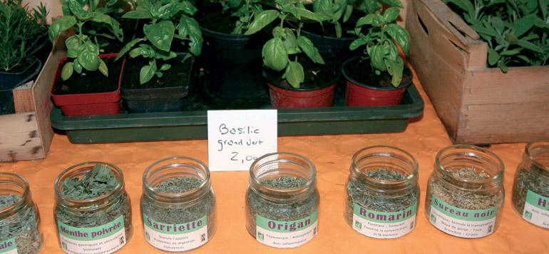 L'avenir prometteur des plantes aromatiques et médicinales
