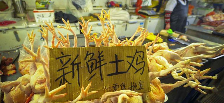 Chine: 79 décès dus à la grippe aviaire durant le mois de janvier