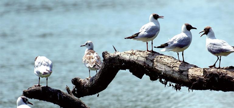 Une stratégie nationale pour préserver les zones humides