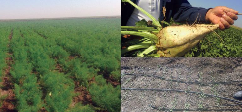 SIAM 2017 : Comment des agriculteurs doukkalis ont réussi le pari de  la diversification et de la modernisation