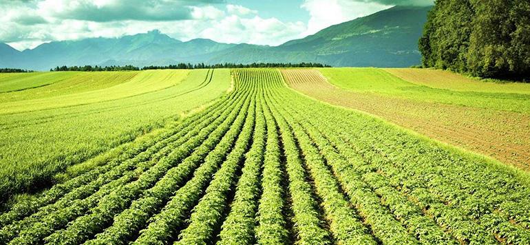 Agriculture bio, une filière à fort potentiel