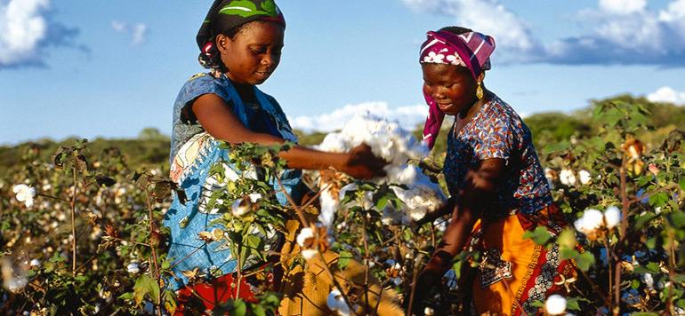 Le coton africain cherche à redorer son blason