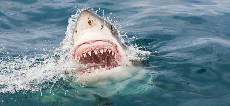Australie: Un requin tue une jeune surfeuse devant ses parents