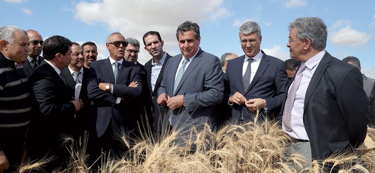 Casablanca-Settat : une bonne campagne agricole attendue