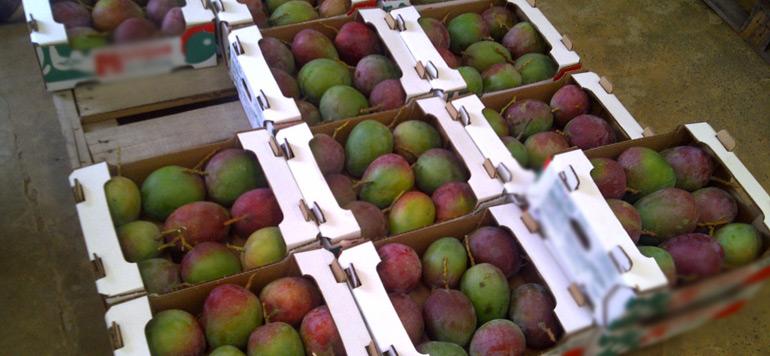 Nador : Saisie par la Gendarmerie Royale d'une importante quantité de fruits de contrebande