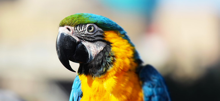 Italie : Il tue sa voisine, excédé par les insultes de son perroquet