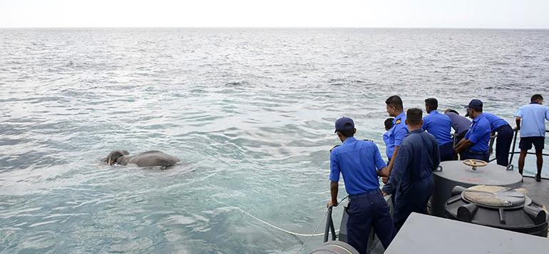 Sri Lanka : La marine sauve miraculeusement un éléphant en plein mer