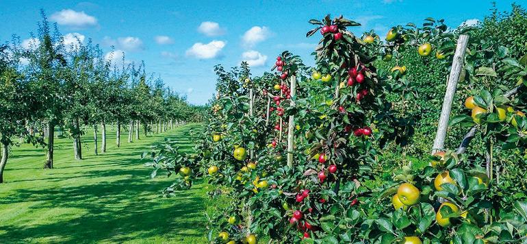 Al Hoceima : plusieurs projets en soutien aux petits agriculteurs