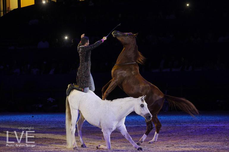 Diapo spectacle haut en couleurs pour la 10e dition du for Salon du cheval montpellier 2017