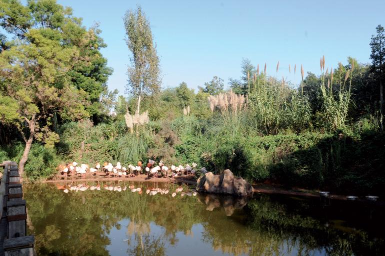 jardin zoologique de rabat immersion dans le monde