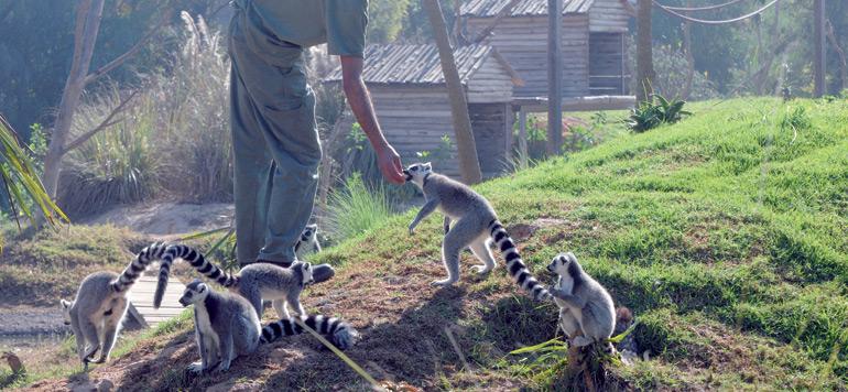 Jardin Zoologique de Rabat :  immersion dans le monde animal…