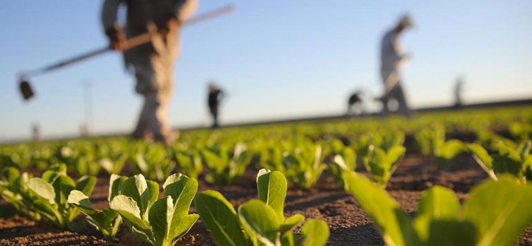 Financement de l'agriculture : Tamwil El Fellah, près de 800 MDH de crédits et 73 000 clients