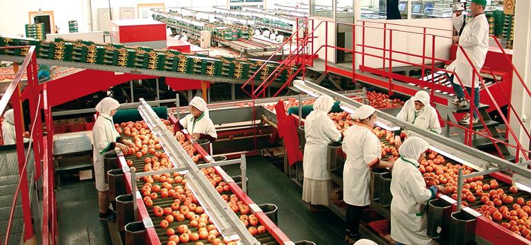Financement de l'agriculture : Une offre intégrée pour accompagner l'agriculture et l'agro-industrie