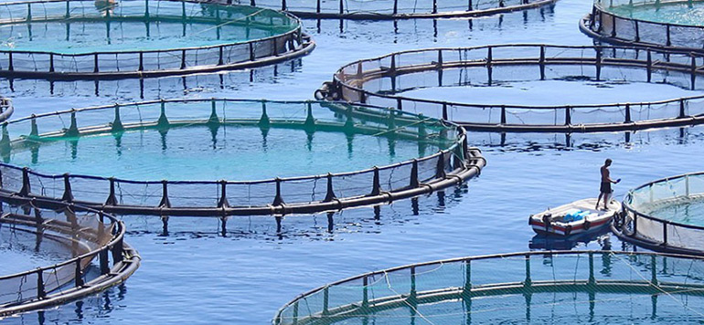 Aquaculture : le Maroc veut s'inspirer de l'expérience chinoise