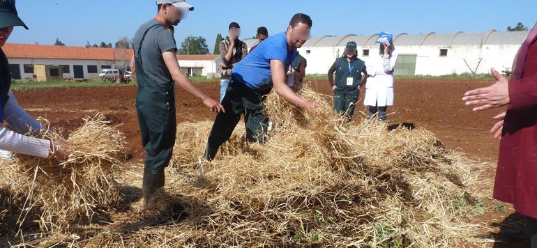 L'agroécologie se fraye un chemin dans les campagnes marocaines